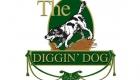 Diggin Dog